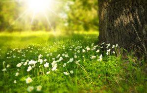 La réduction de nos impacts environnementaux